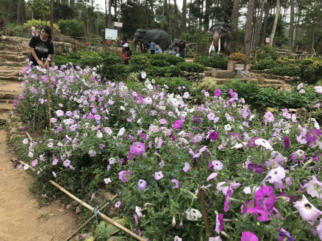 ボタニカルガーデン(Botanical Garden)